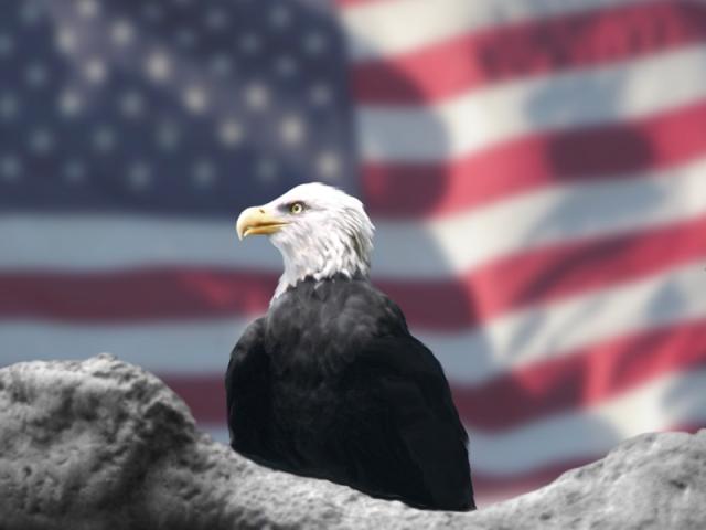 Bald Eagle American Flag Fourth of July